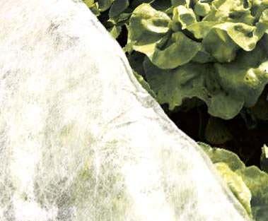 Frühbeetvlies Kälteschutzvlies Gemüsevlies 15 m²